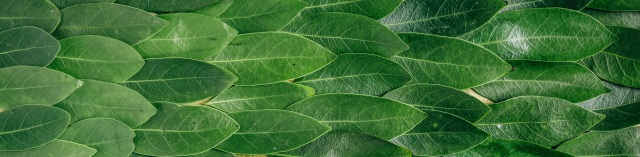 Layered Green Leaves